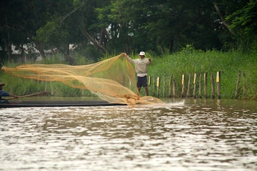 Fisherman tossing the net, Inle Lake