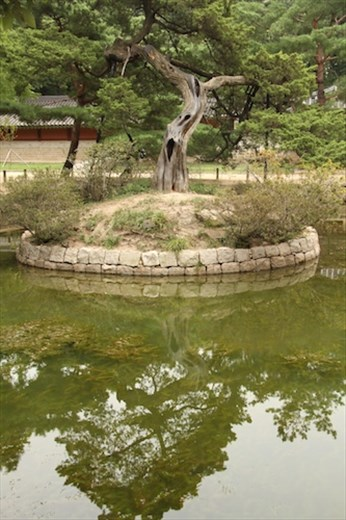 Sacred tree, Jongmyo Shrine