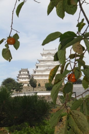 Fall persimmons and Himeji Castle