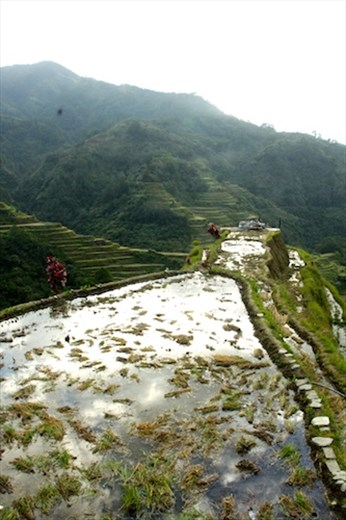 Banaue Terraced Rice Paddies