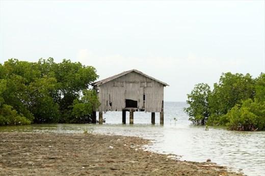 Bird sanctuary, Olango Island