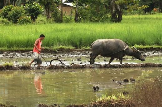 Old school farming, Sabang, Palawan