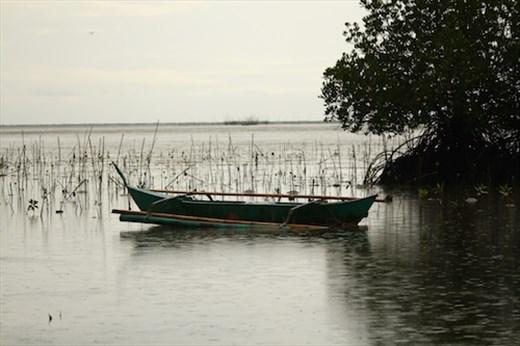Mangroves on a rainy day, Puerto Princesa