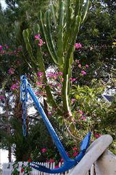Aphrodite's Beach Trail, West Coast near Polis: by vagabondstoo, Views[174]