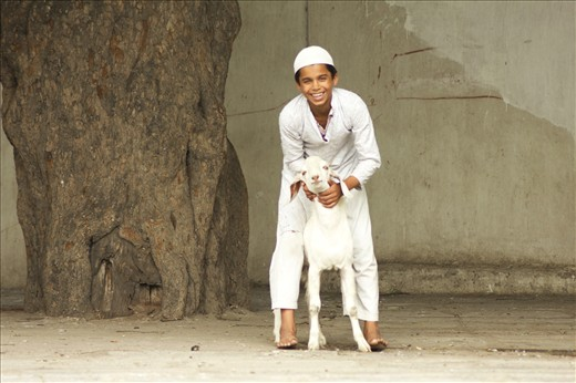 In contrary to bakri-eid, it's a playful delicate bonding of humans and animals