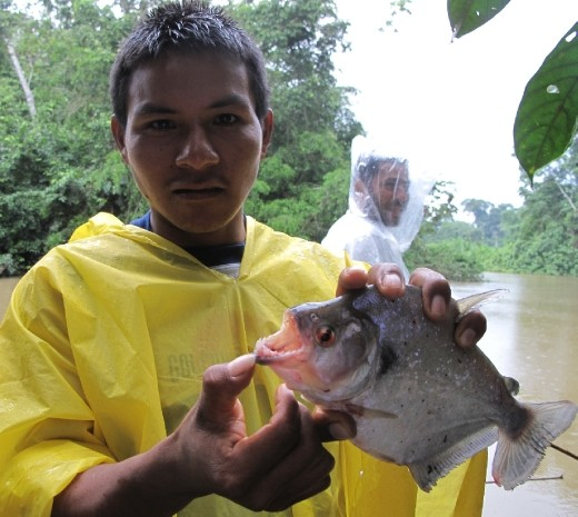 Turtle from the Shiripuno River
