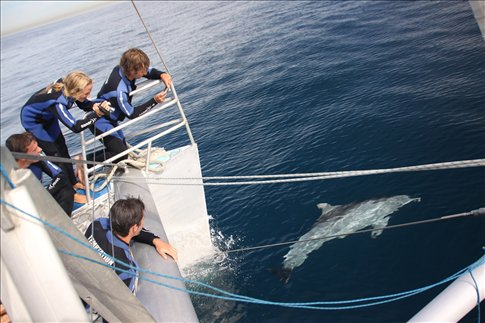 Temptation Sailing with Wild Dolphins
