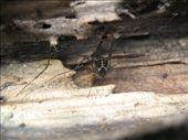 harvestmen in rotten wood: by viajerofrye, Views[211]