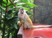 and they ate bananas!: by viajerofrye, Views[132]