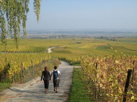 Strolling through the Alsace