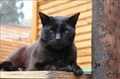 The same syndrome affects black cats.: by vims, Views[112]