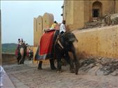 Elephants carrying tourists up the hill: by violet, Views[106]