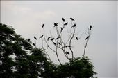 In the summer, enjoy the crows: by vir, Views[78]