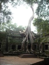 ta prohm temple: by vivienne_and_iona, Views[249]