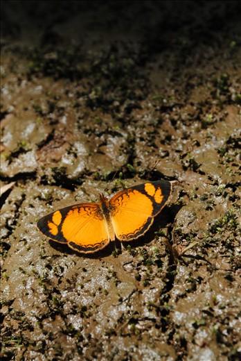 Long live the butterflies.