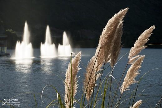 Fox tails & International Hotel's fountain in the lake of El Potrero de los Funes.