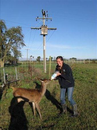 Feeding a fawn!!! Awww, I was so happy.  :)