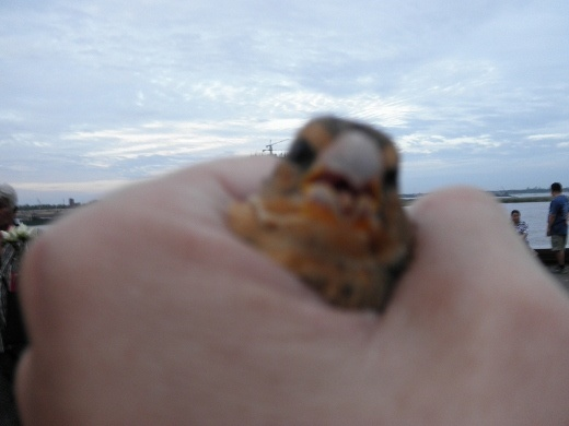 Moral delimma - set a wild bird free and support this awful