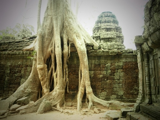 Another melting tree at Taprohm