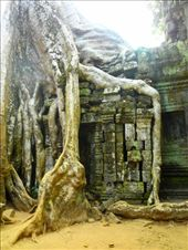 I spent more time at Taprohm than at any other temple, including Angkor Wat: by walkingabout2, Views[130]