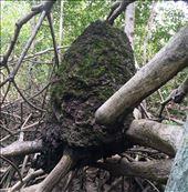 termites....they really do taste similar to peanuts: by walt, Views[15]