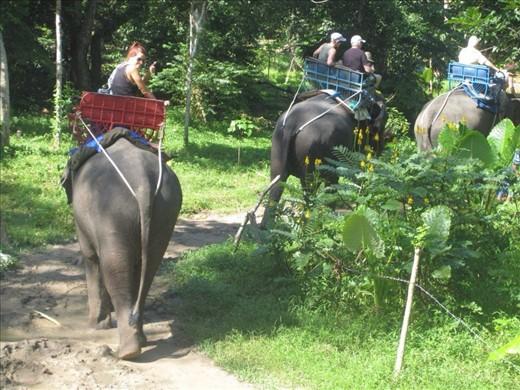 Elephant Trekking, Koh Samui