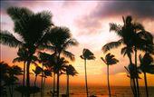 Plan my trip to hawaii: by wassana, Views[680]