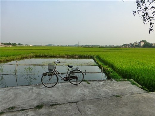 Looking out over rice fields we have been riding.