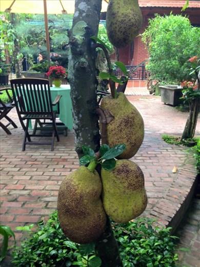 Jackfruit at Betel.
