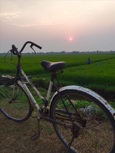 Sun rise over the rice fields
