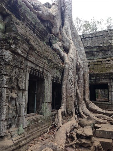 Angkor Wat Complex Trees growing out of the ruins.