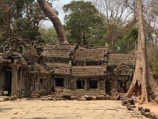 Angkor Wat Complex with Trees growing out of the ruins