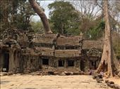Angkor Wat Complex with Trees growing out of the ruins: by wendyandkevin, Views[149]