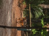 Dirty dingo: by whereintheworld10, Views[172]