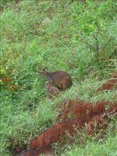 Our neighbors, the Wallaby's.: by whitneyj, Views[345]