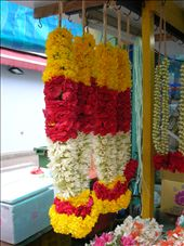 Little India's flower garlands: by whitneyj, Views[786]