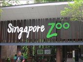 The Singapore Zoo: by whitneyj, Views[374]