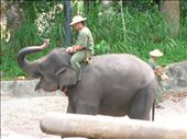 Elephant - a curled up trunk can bring good luck : ): by whitneyj, Views[766]