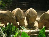 Rhino party: by whitneyj, Views[330]