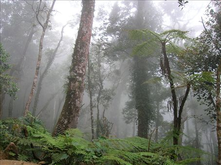 Dark, damp, and moist.  The Dipterocap forest.