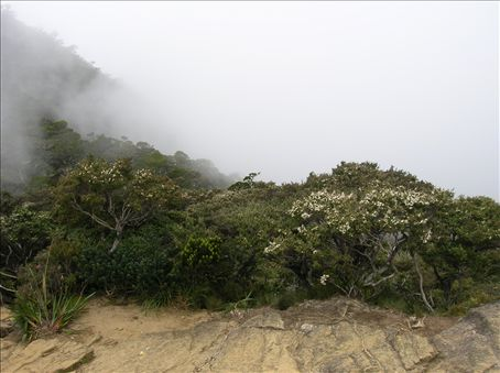 Cloud forest.
