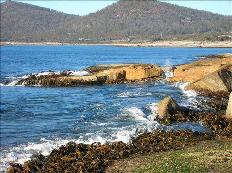 Rocks and kelp help create sea spray near the Blow Hole.