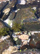 Mini-ecosystem.: by whitneyj, Views[304]