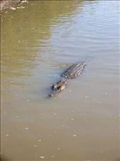 Female Estuarine crocodile.: by whitneyj, Views[321]