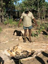 Johnny explains how Aborigines dug pits in the ground, lined them with paperbark and rocks and added fire to use them as ovens.: by whitneyj, Views[278]