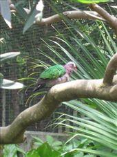 Emerald Dove.: by whitneyj, Views[251]