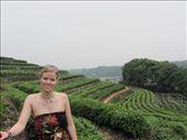 Hangzhou is famous for their longjing green tea: by wi-niko, Views[132]