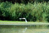by wildlifelover, Views[94]