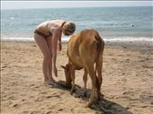The whitest person on the beach feeds a cow a watermelon: by will-n-raina, Views[948]