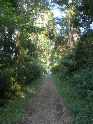 The French railway line running through the forest on Don Khone.